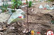 آبیاری و آب رسانی به ریشه گلها و درختان با بطری