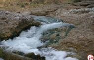 ماهی درمانی در رودخانه دهرم