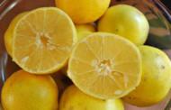 آغاز برداشت لیمو شیرین از قطب تولید این محصول در کشور
