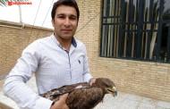 تحویل عقاب مصدوم به اداره حفاظت محیط زیست فراشبند