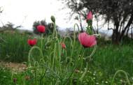 گزارش تصویری از طبیعت بهاری قنات باغ