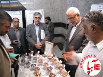 IMG_3149_resize به بهانه ی برگزاری جشن قصب و خرما در فراشبند
