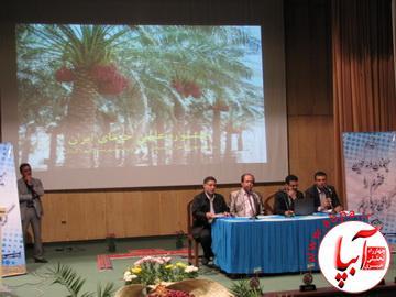 IMG_3237_resize به بهانه ی برگزاری جشن قصب و خرما در فراشبند