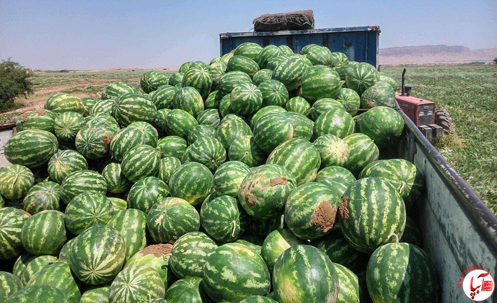 هندوانه بسته خبری آبپا :خرم آن نغمه که مردم بسپارند به یاد