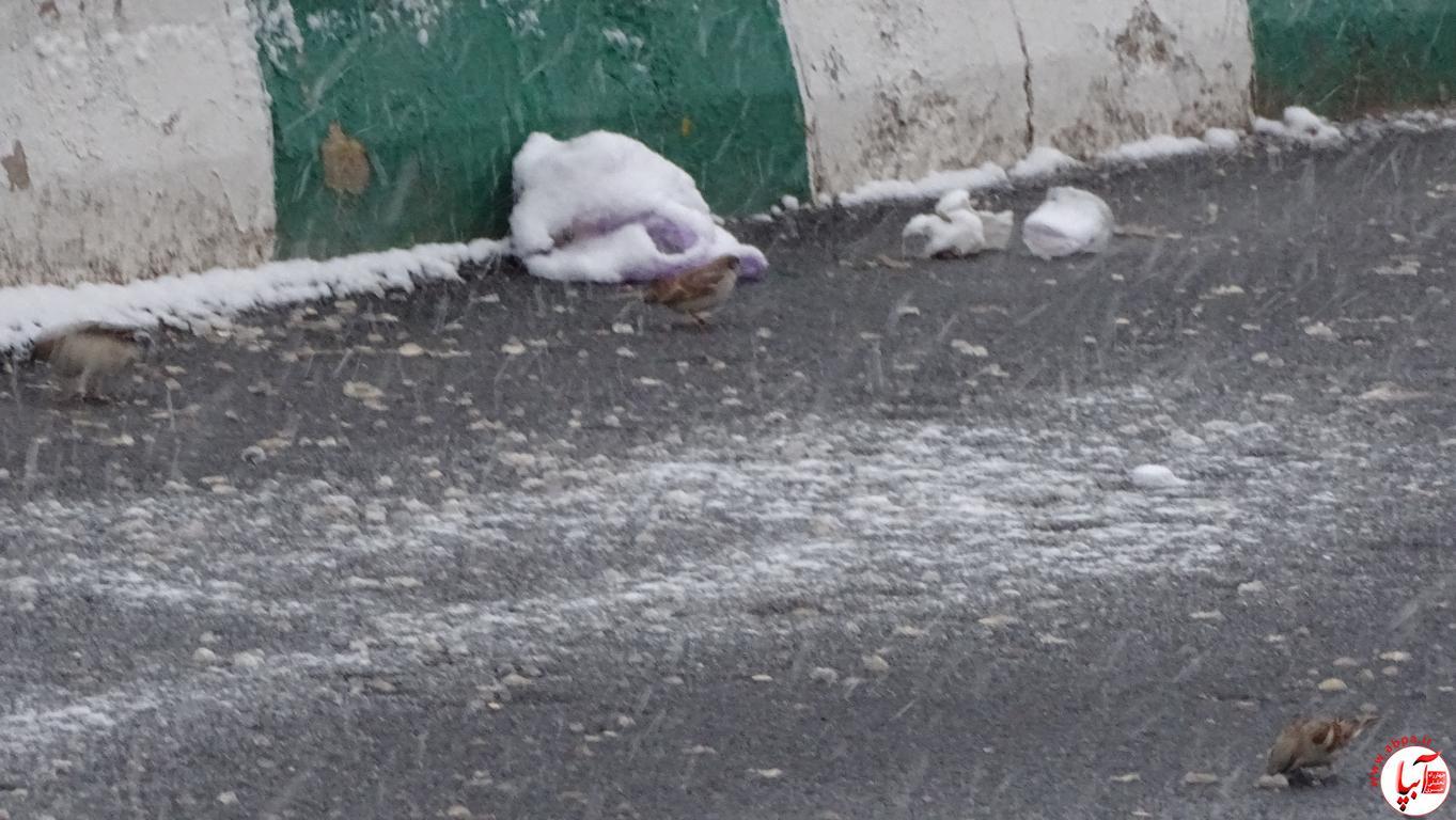 آبپا برف (33)