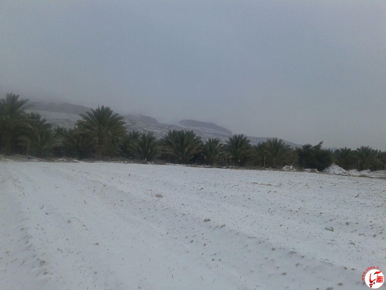 برف (4)