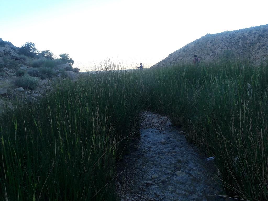 بیشه-چشمه-برم-فرهاد کوهنوردی و بازدید از دریاچه دشت گورم
