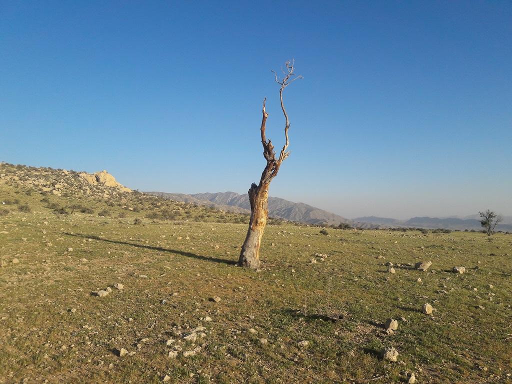 مرگ-درخت کوهنوردی و بازدید از دریاچه دشت گورم