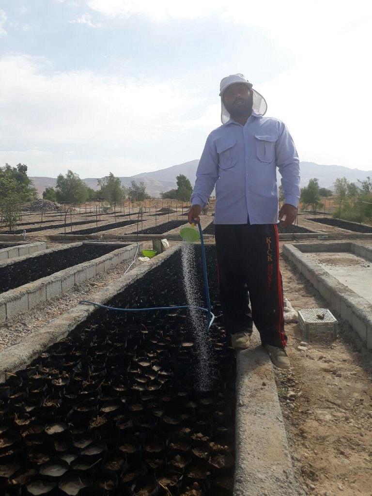 photo_2017-08-19_17-54-06 کاشت 50000 اصله نهال در نهالستان نوجین