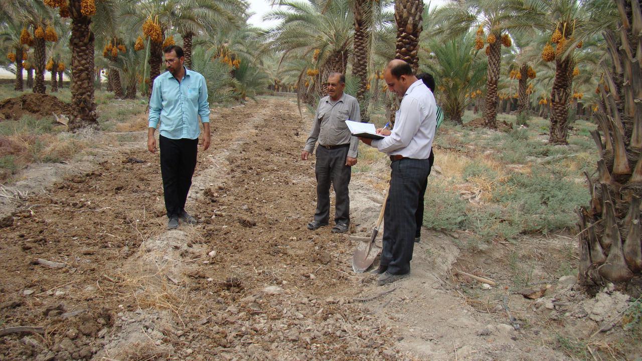 کاشت آزمایشی زعفران در شهرستان فراشبند
