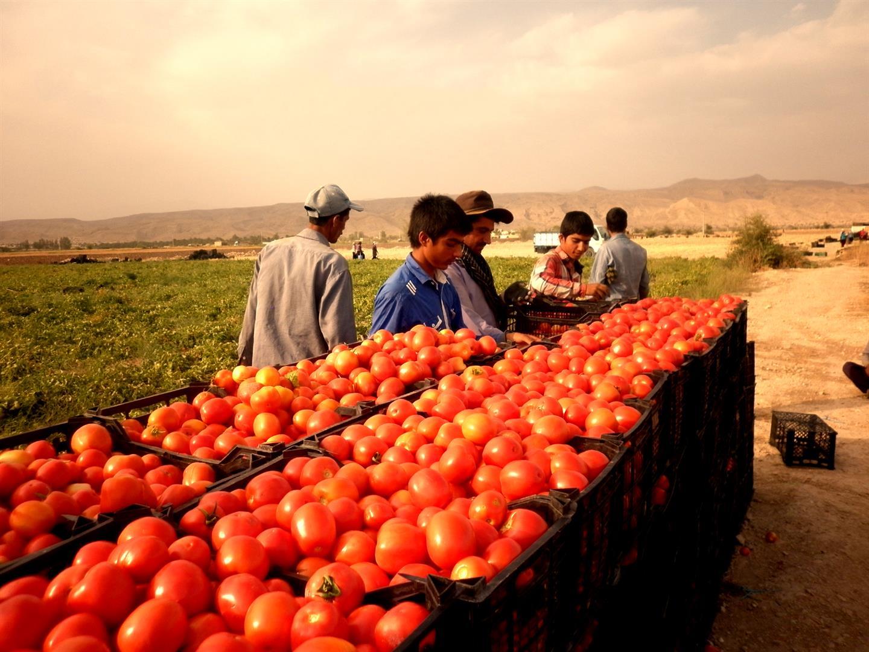 a 4 Large - معرفی شهرستان فراشبند