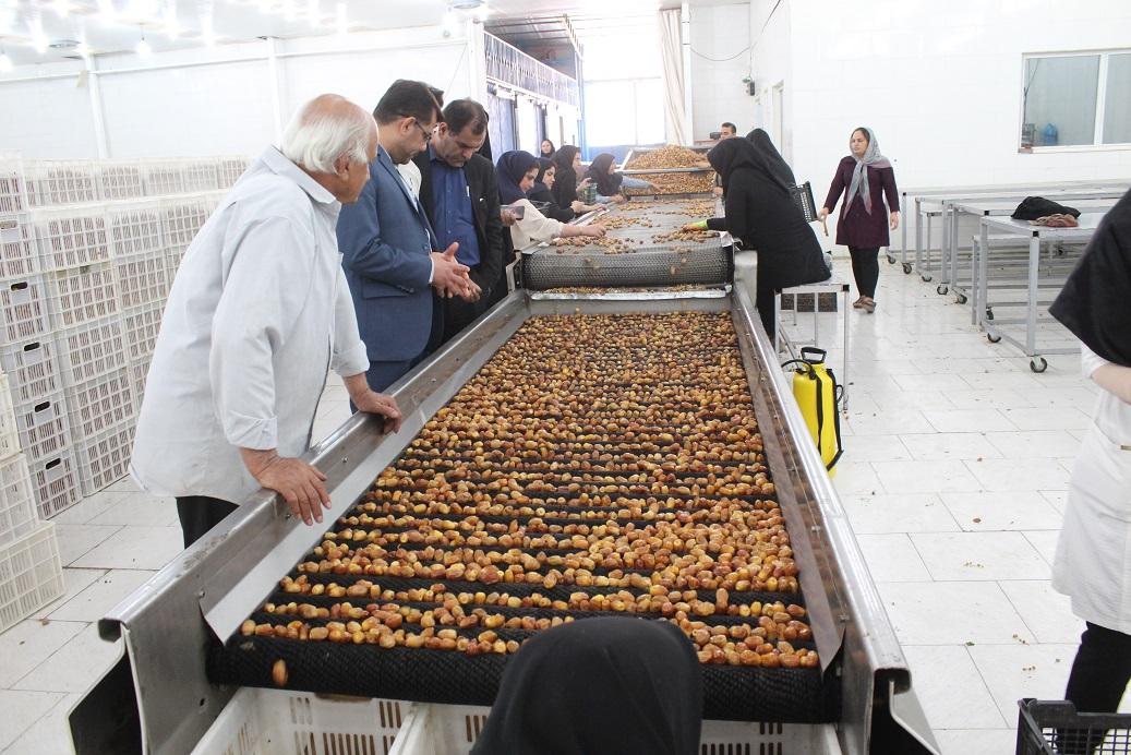 بازدید فرماندار فراشبند از کارخانه و مراکز بسته بندی قصب و خرما شهرستان