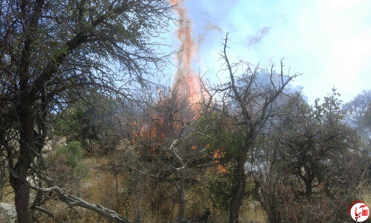 20 هکتار از مراتع طبیعی فراشبند در آتش سوخت