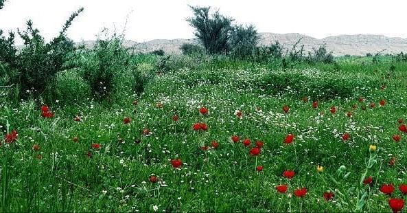 بهار خلجیخلجیروستایی از توابعبخش مرکزیشهرستان فراشبنداست.خلجی معروف به چشمه ایست که از آن یاد میکنند.#فراشبند #خلجی